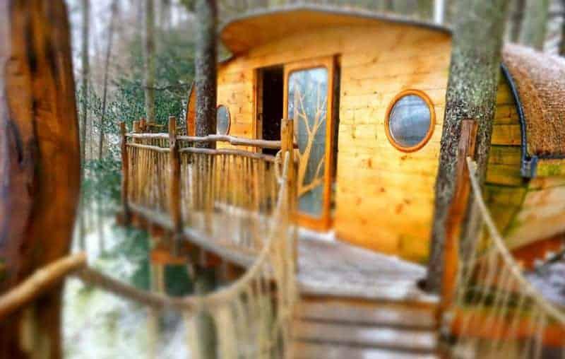 Living-Room-Tree-House-experience